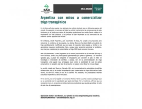Argentina con miras a comercializar trigo transgénico