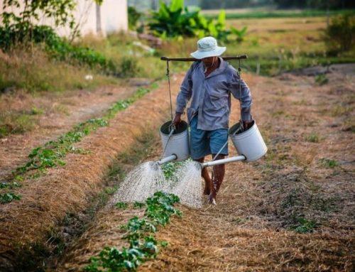 La ruta de Colombia para consolidarse como una despensa del mundo