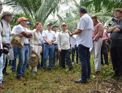 #ConNuestrosAfiliados: Visita a los cultivos de palma en Tumaco