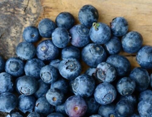 Arándano azul, la futura estrella de la canasta agroexportadora del país