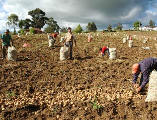 ¿Qué hace falta para que llegue más crédito a los agricultores?