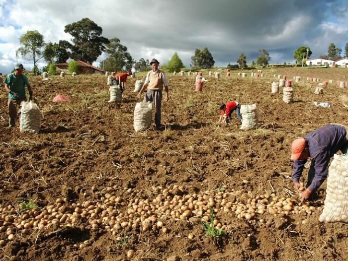 ¿Cuál será el papel del agro en la reactivación?