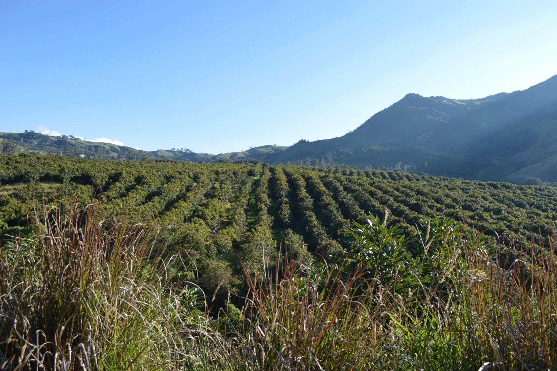 En Colombia solo se está usando un 18% de la tierra que tiene el aval para ser cultivada