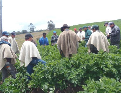 Drama en el campo: no hay quién compre y las cosechas se pierden