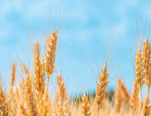 Índice Global de Seguridad Alimentaria: Colombia avanza ocho puestos