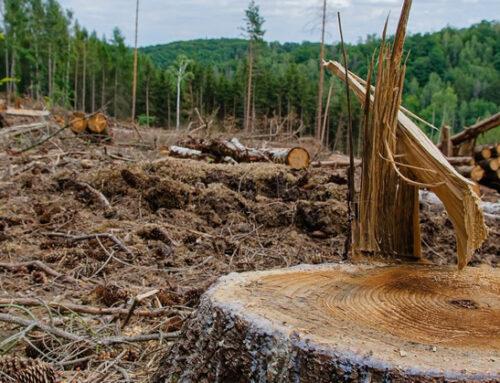 Delitos: Se fortalece defensa de los recursos naturales